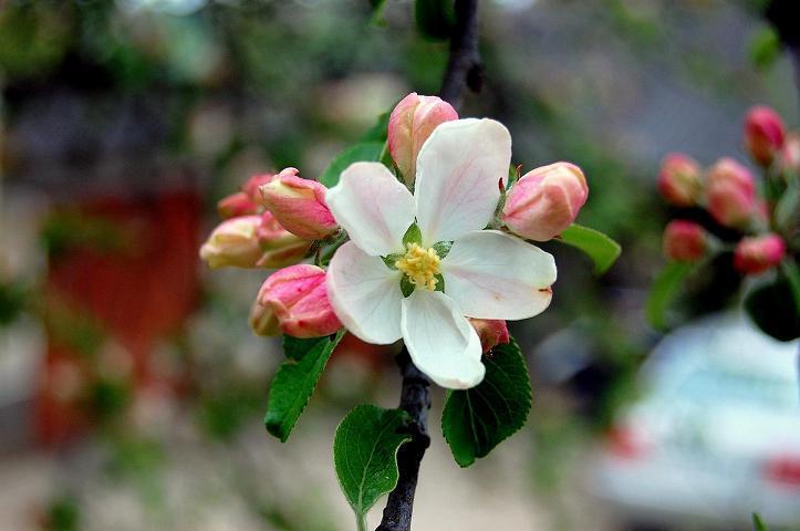 Удобрение сада весной