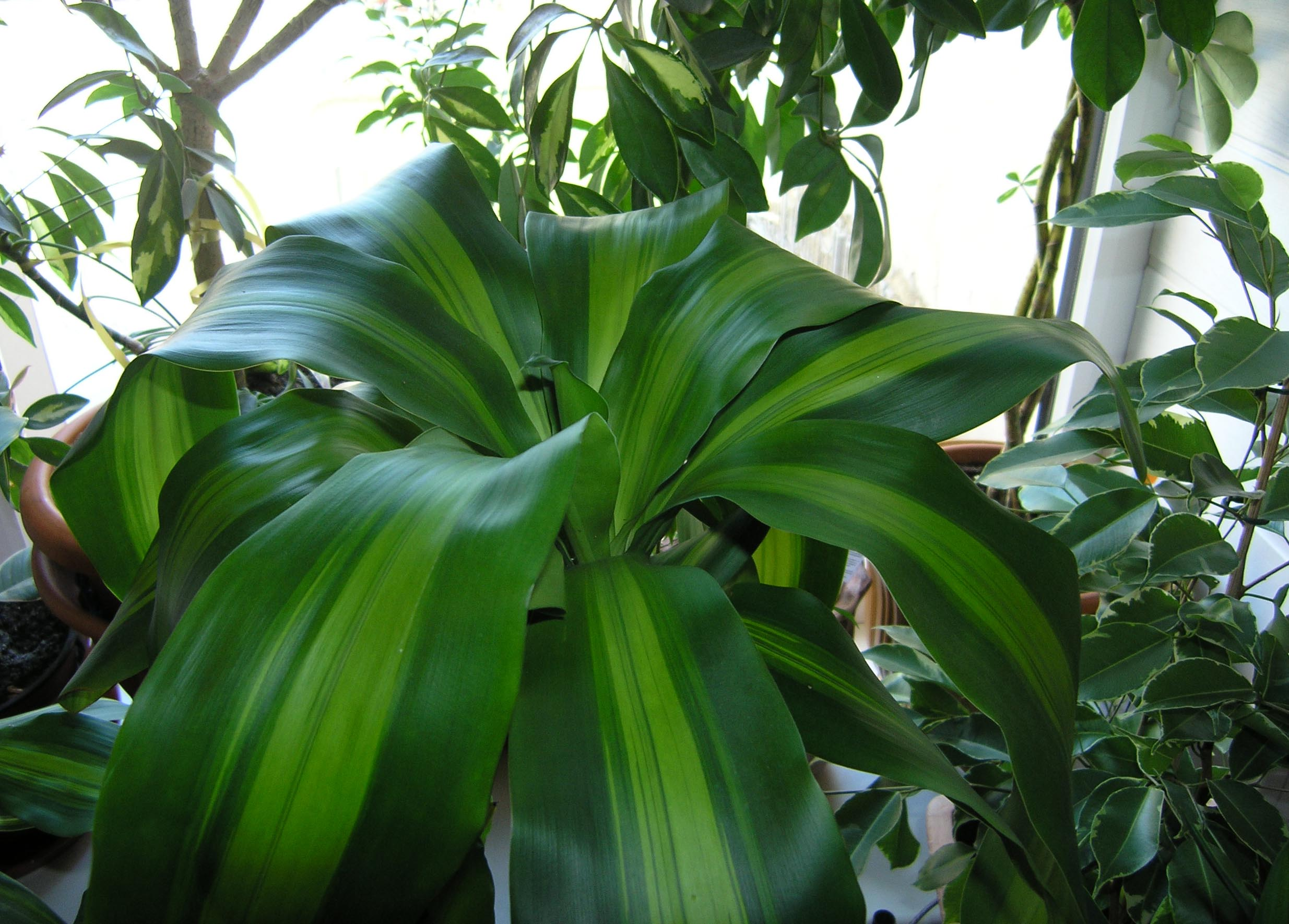 Комнатные растения без цветков фото