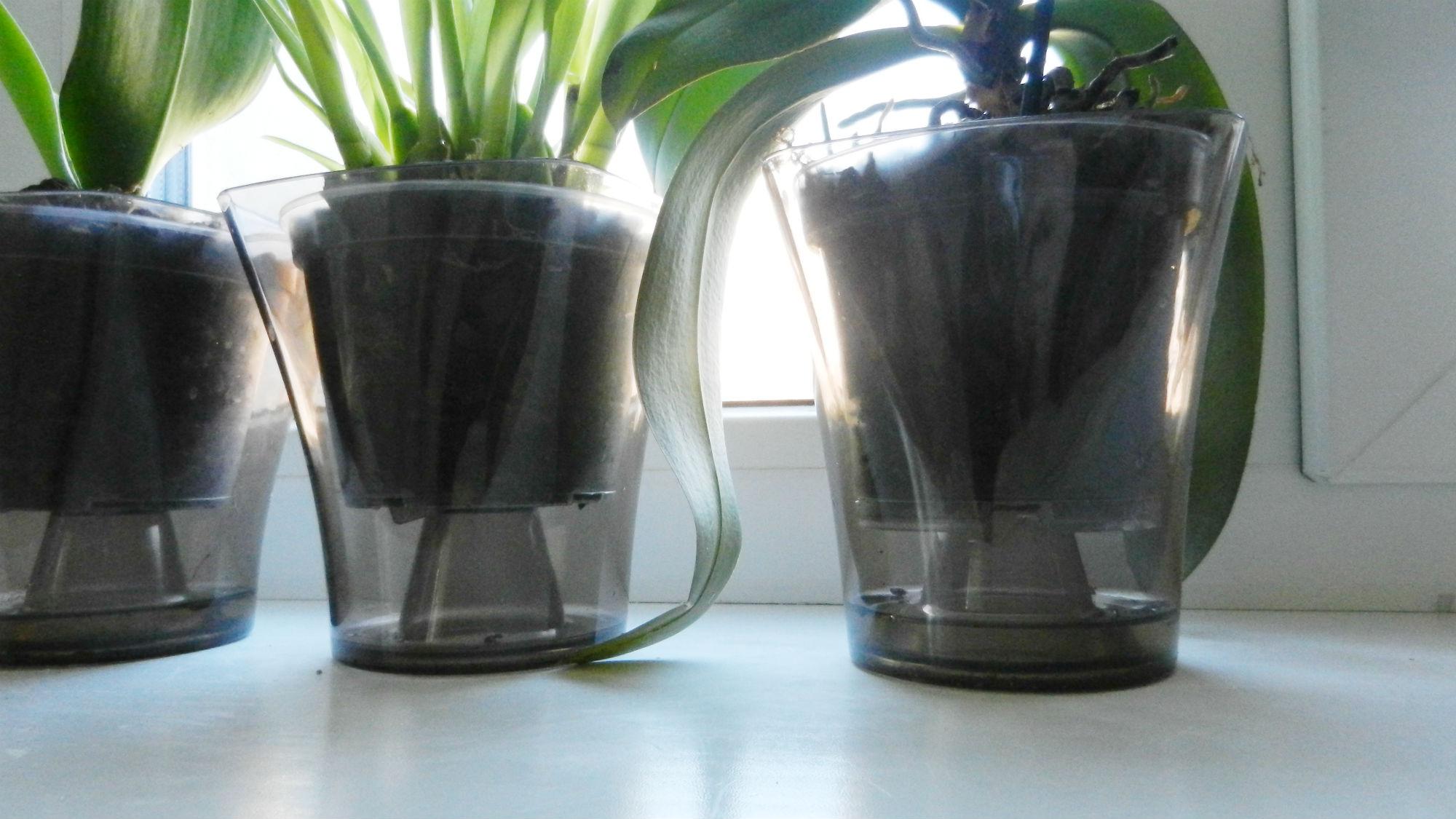Вазон для полива орхидеи зимой.