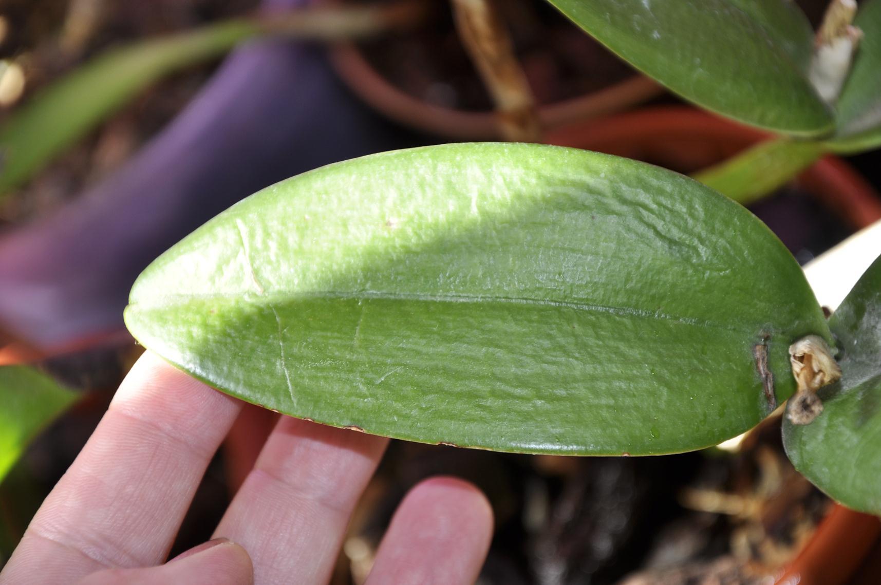 Болезни орхидей и их лечение в домашних условиях