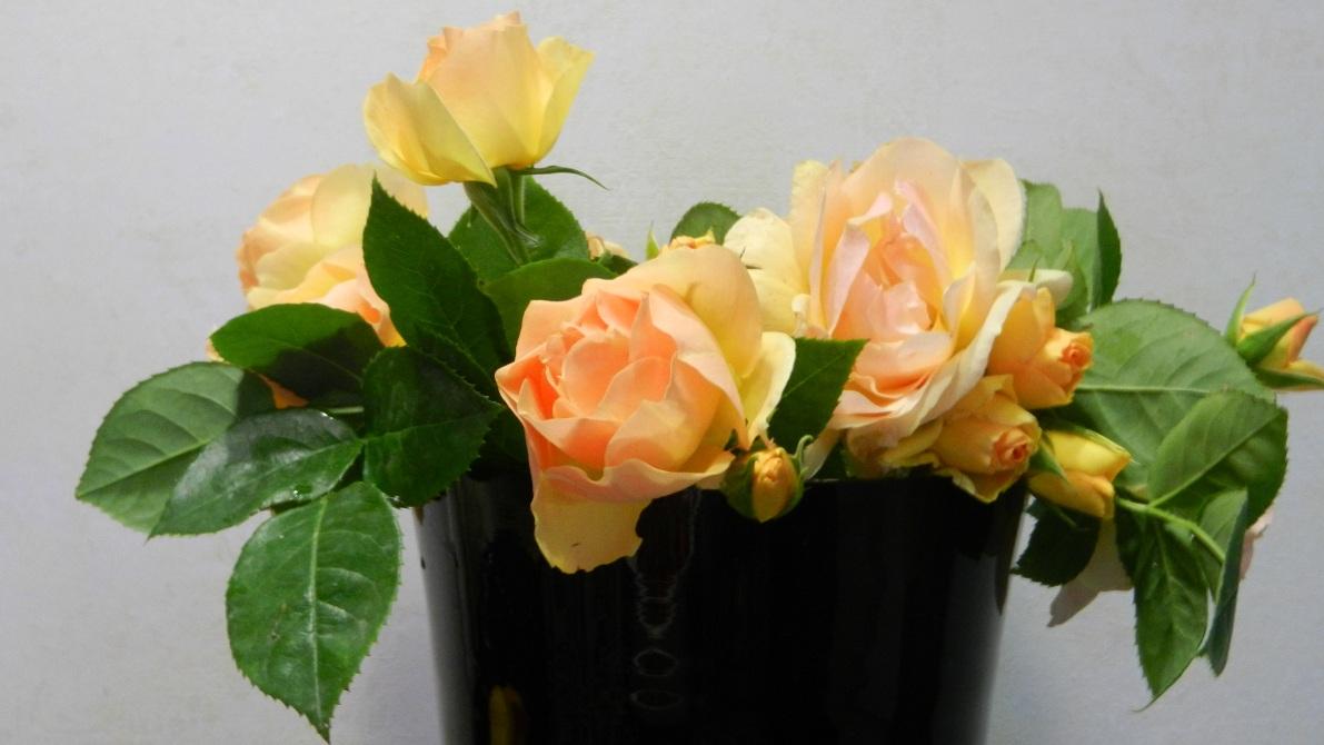 Розы после обрезки черенков