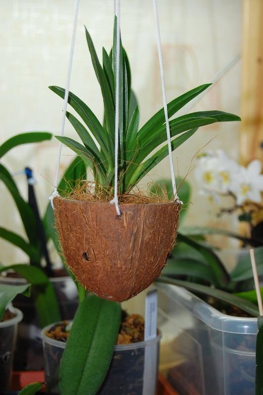 Горшки для орхидей своими руками 70