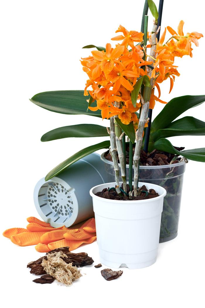 Пересаджування орхідей