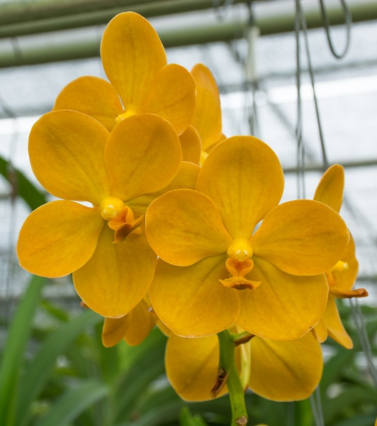 Разновидность орхидей