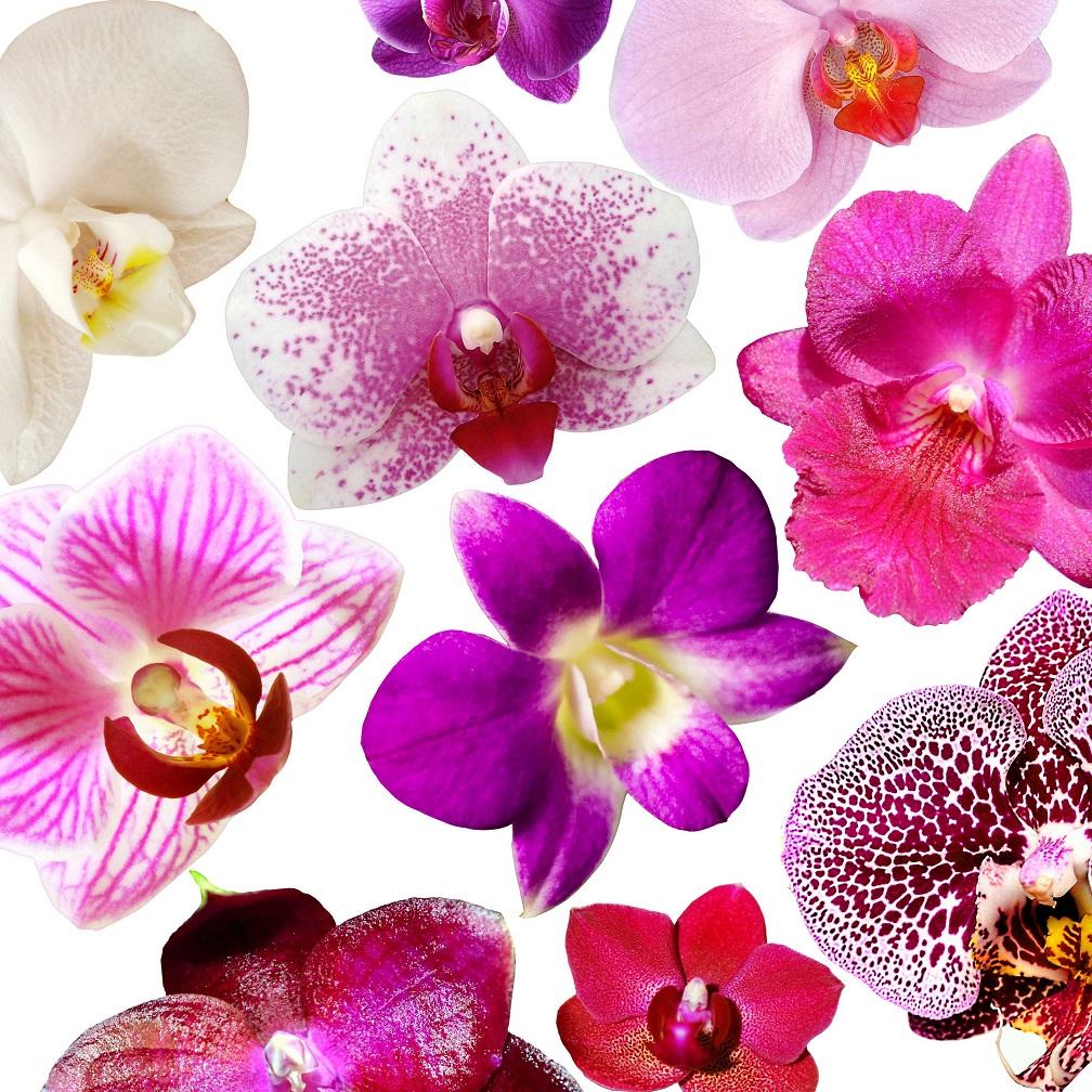 Орхидея. Вредители