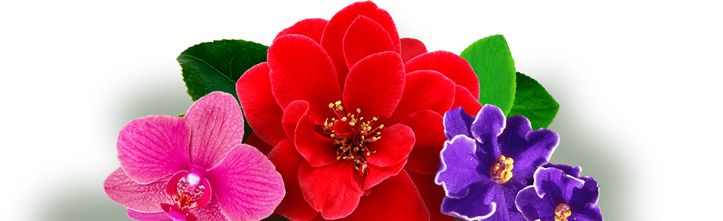 что такое подкормка для растений комнатных роз